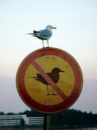 Bird Breaking Rules